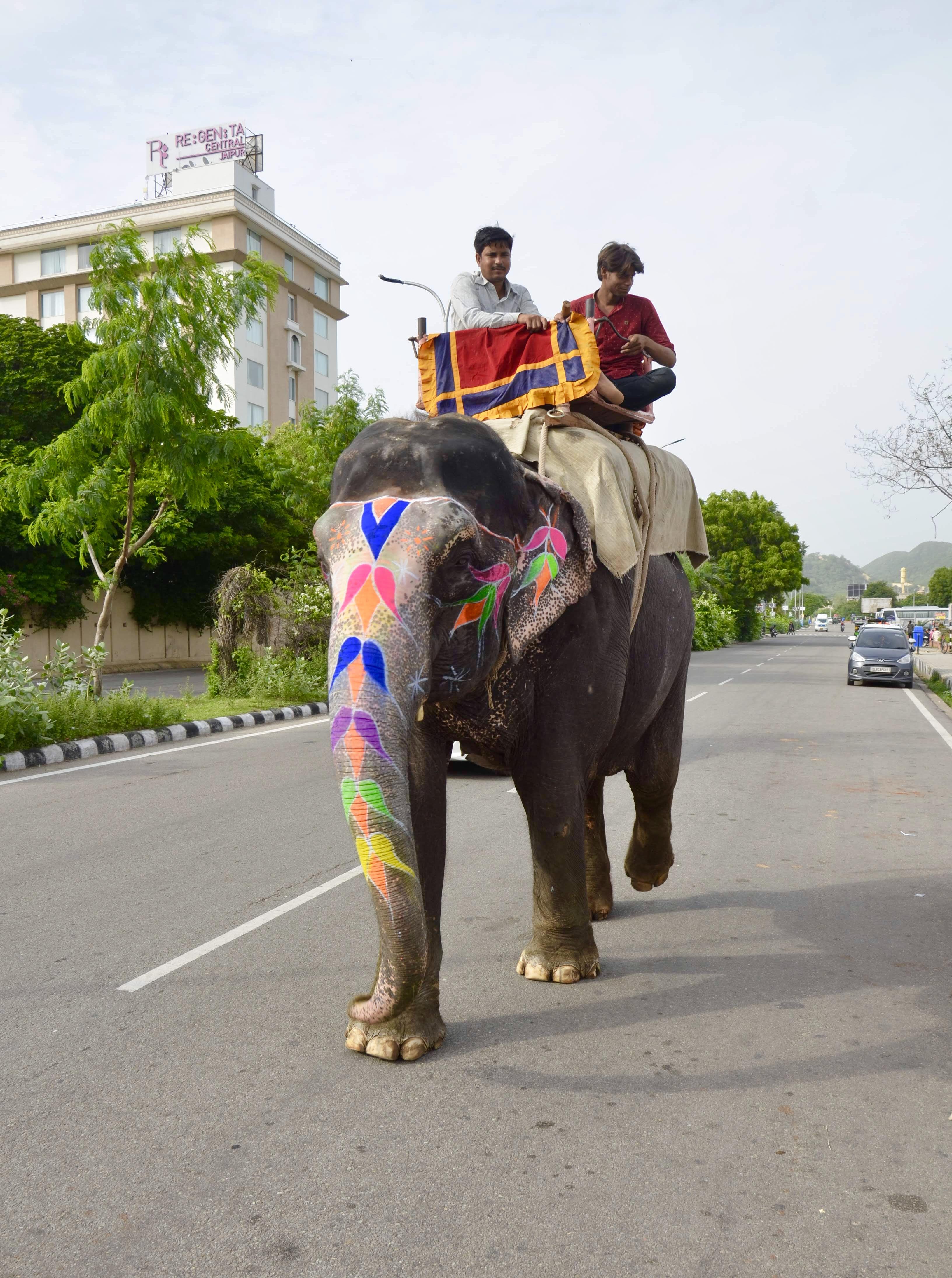 Elefante pelas ruas de Jaipur