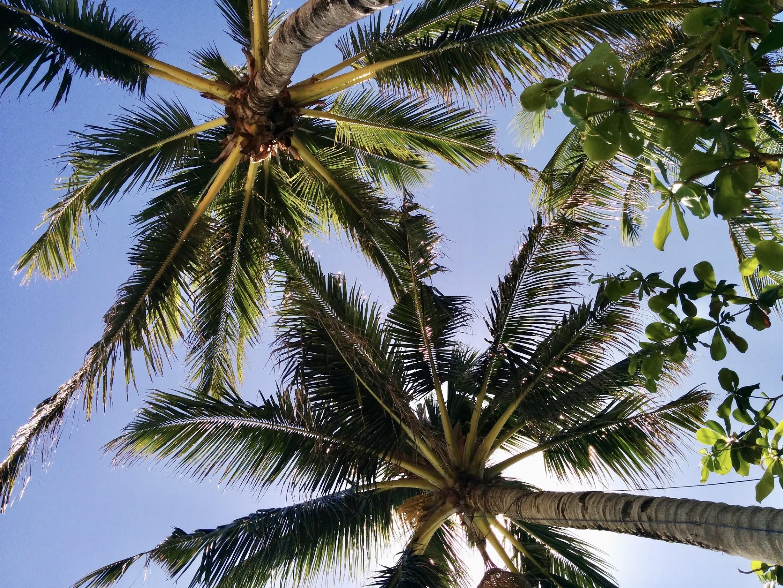 Coqueiros em Boracay